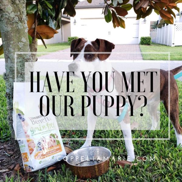 Have you met our puppy Ella?